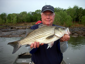Big fat hybrid stripers...