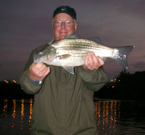 Hybrid stripers in the dark...
